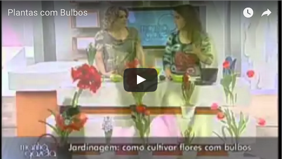 Plantas com bulbos – TV Gazeta